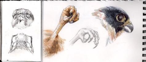 Bat Falcon sketches GALVEZ
