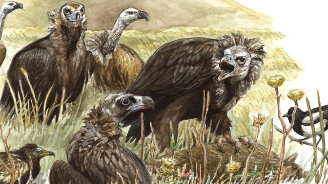 Vultures of the Caucasus
