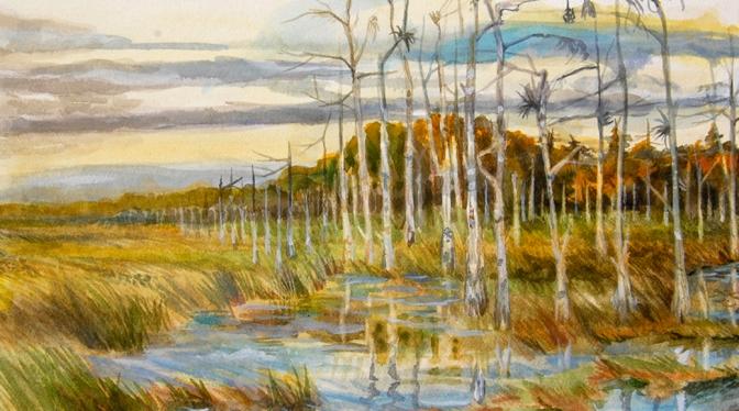 Everglades Sketchbook 8