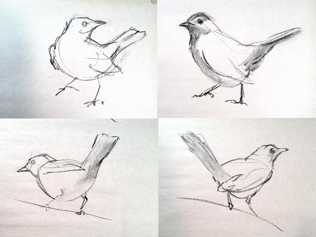 Gray catbird gestures galvez gesture drawings