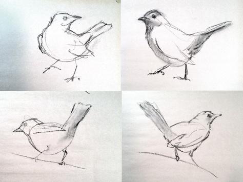 Gray Catbird gestures GALVEZ