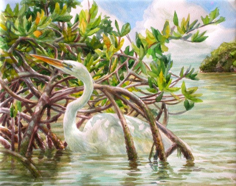 A Great White Heron foraging through Red Mangrove roots along the shallows of Little Torch Key, Florida.