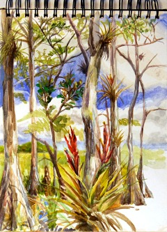 This sketch was done in Big Cypress National Preserve, about 3 miles north of Oasis, from within a cypress dome on February 2, 2007.