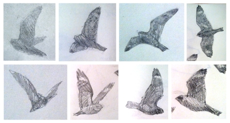 Thumnail sketches of Lesser Nighthawks