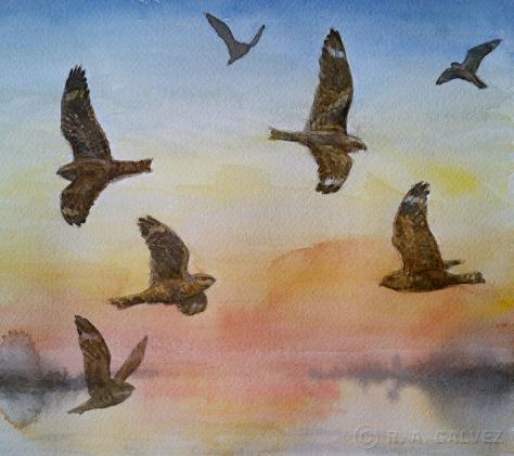 Lesser Nighthawks - November 19, 2012 Field Sketch