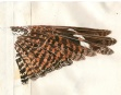 Watercolor and ink pen study of the upper side of the open wing of a Red-necked Nightjar. Sketched in Tarifa, Spain soon after the bird was found dead.