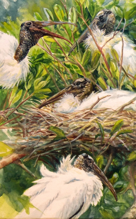 "Detail of ""Wood Storks at Paurotis Pond."" This watercolor is being done on site, while observing the birds through Leica APO-Televid 65 and 77 scopes."