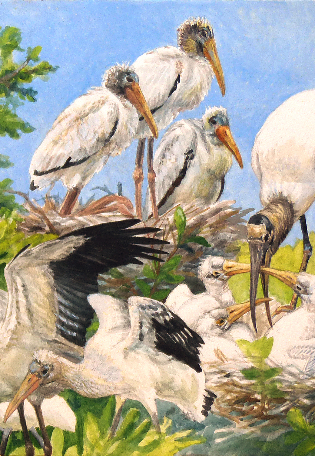 """Detail of """"Wood Storks at Paurotis Pond."""" This watercolor is being done on site, while observing the birds through Leica APO-Televid 65 and 77 scopes."""