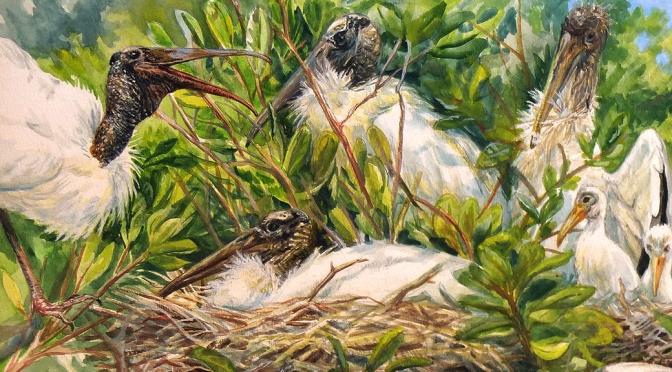 Wood Stork: EVERGLADES